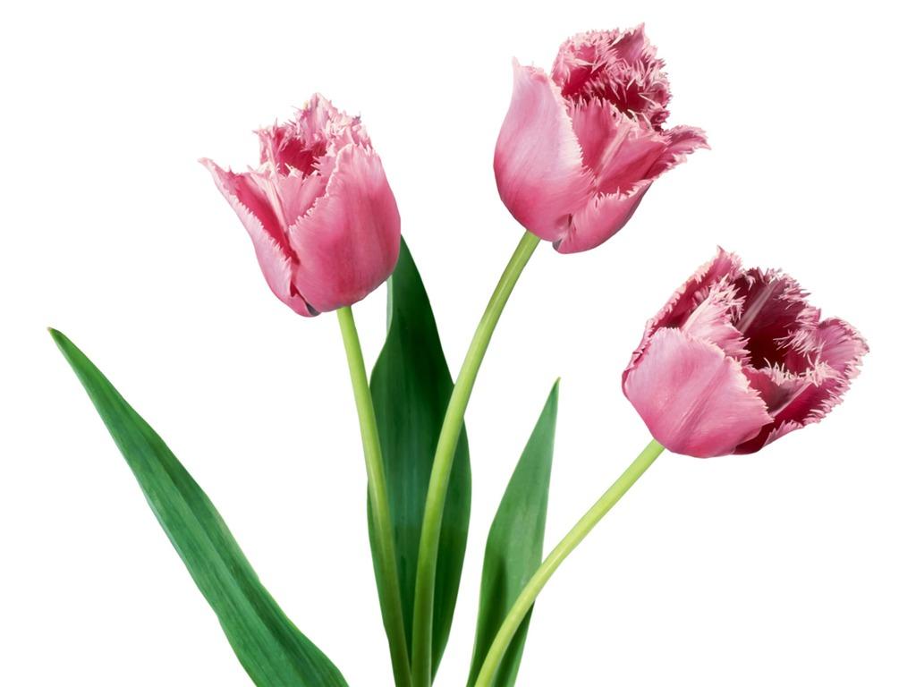 Цветок нарцисс уход и выращивание нарциссов дома в горшке