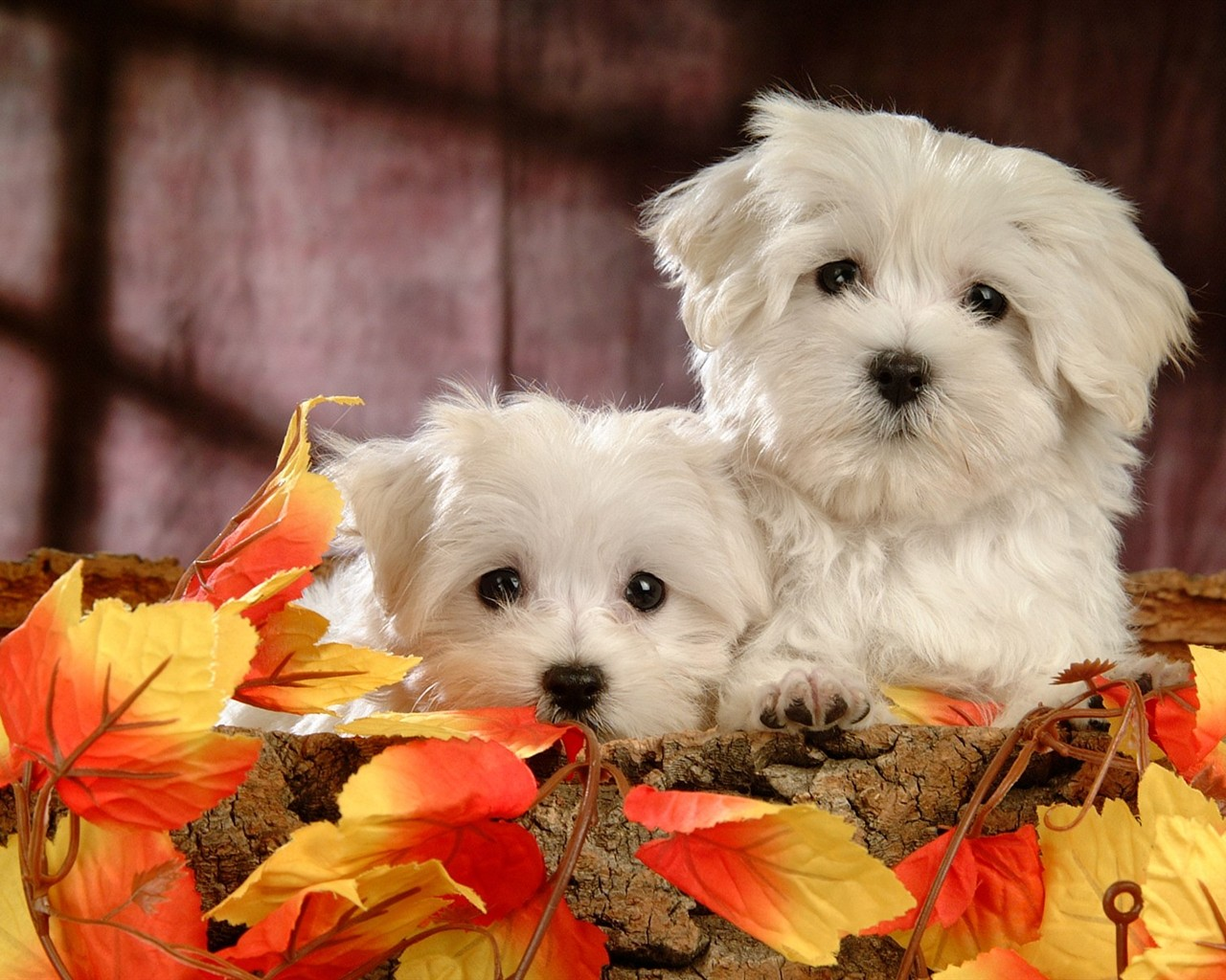 Beautiful dogs wallpaper