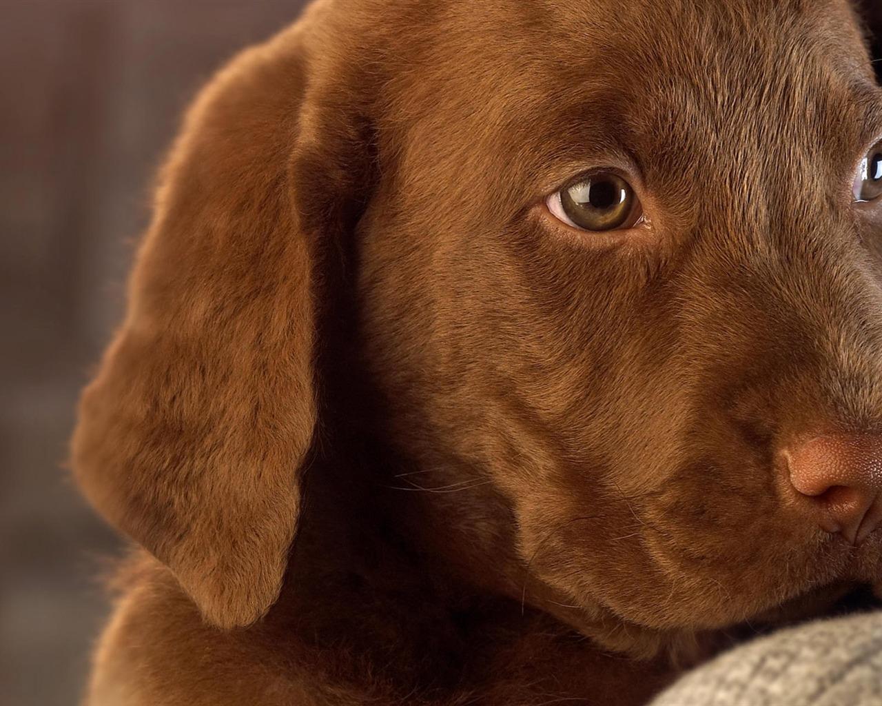 Roztomilý pes 18 1280x1024 foto popis hd wallpaper roztomilý
