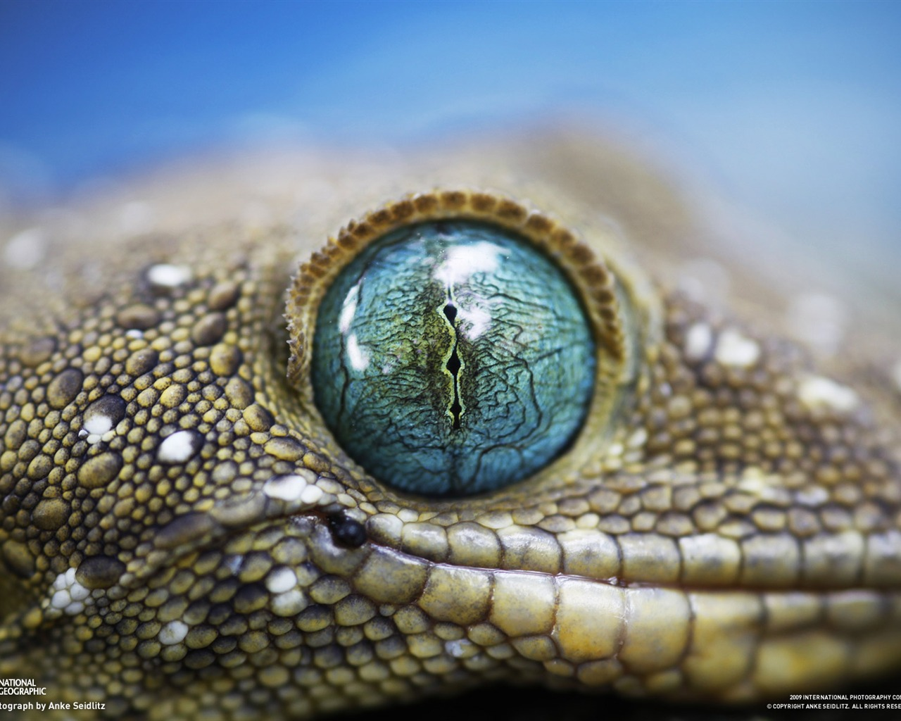 Wallpaper download national geographic - National Geographic Wallpapers Animal Articles 3 19 1280x1024