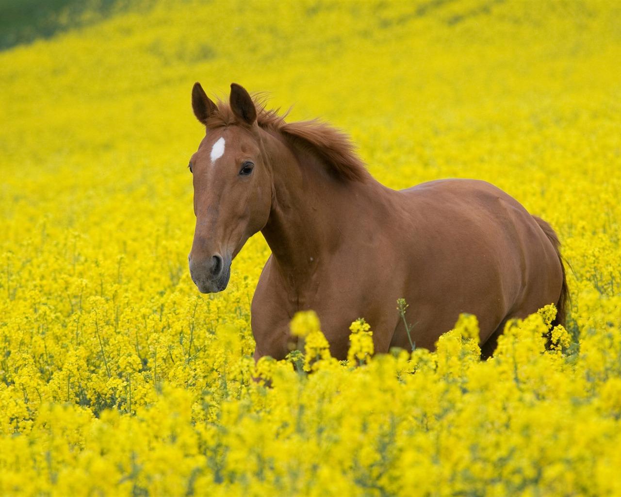 hintergrundbilder pferde 1280 x - photo #12