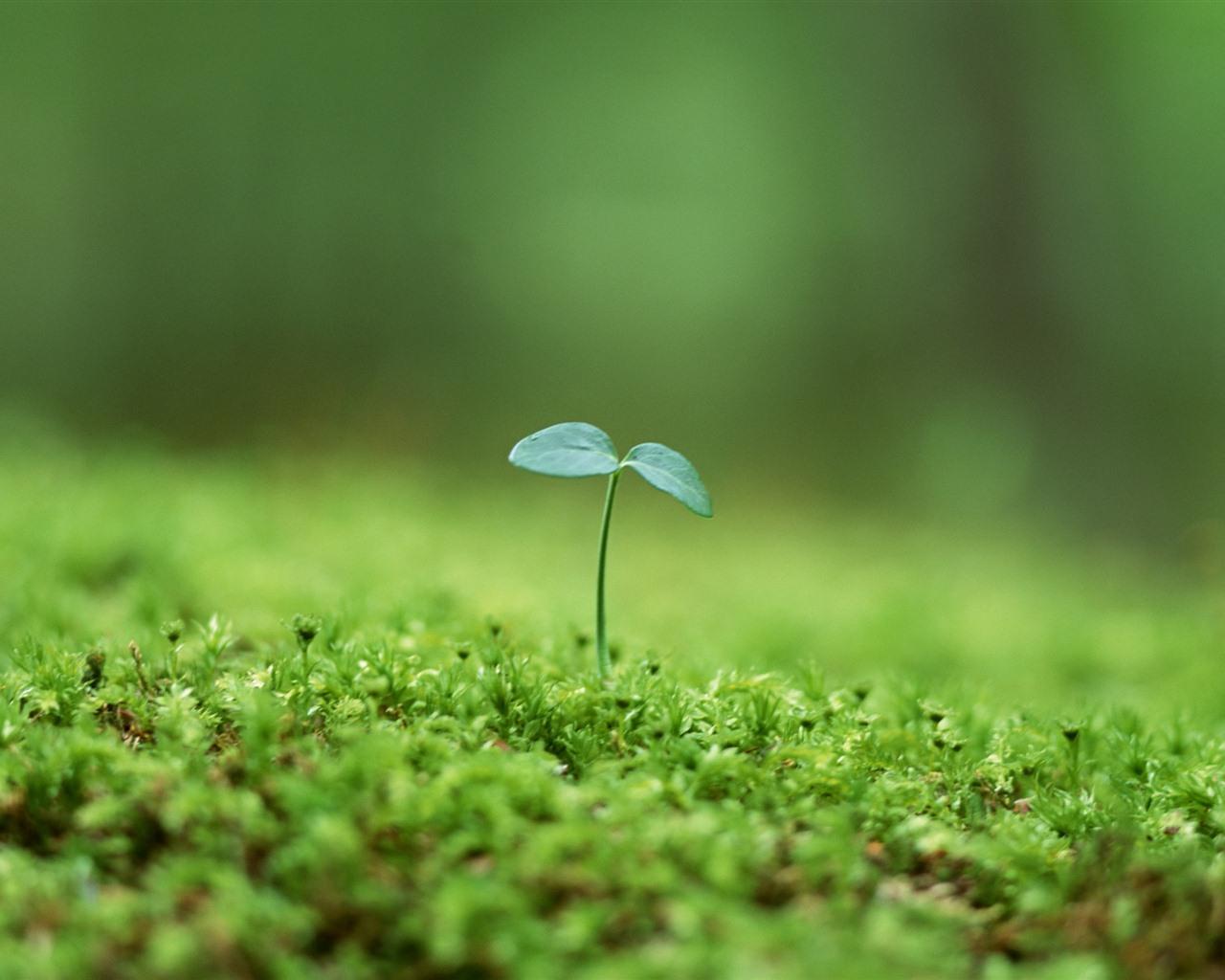 新鮮な緑の芽がクローズアップ壁...