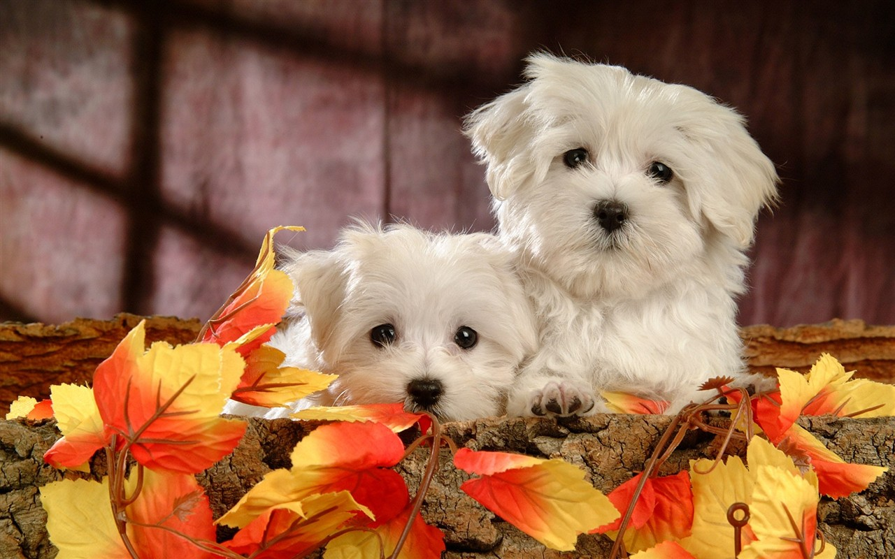 wallpaper cute dogs