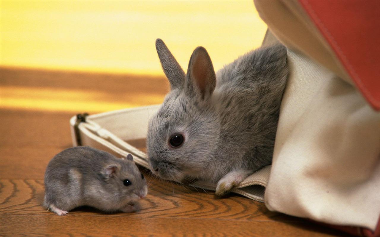 ウサギの画像 p1_39