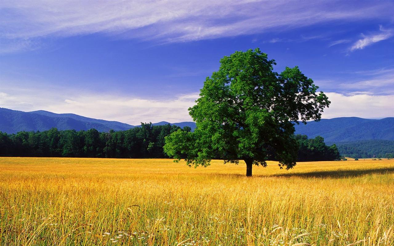 Beautiful natural scenery wallpapers (1) #8 - 1280x800 Wallpaper ...