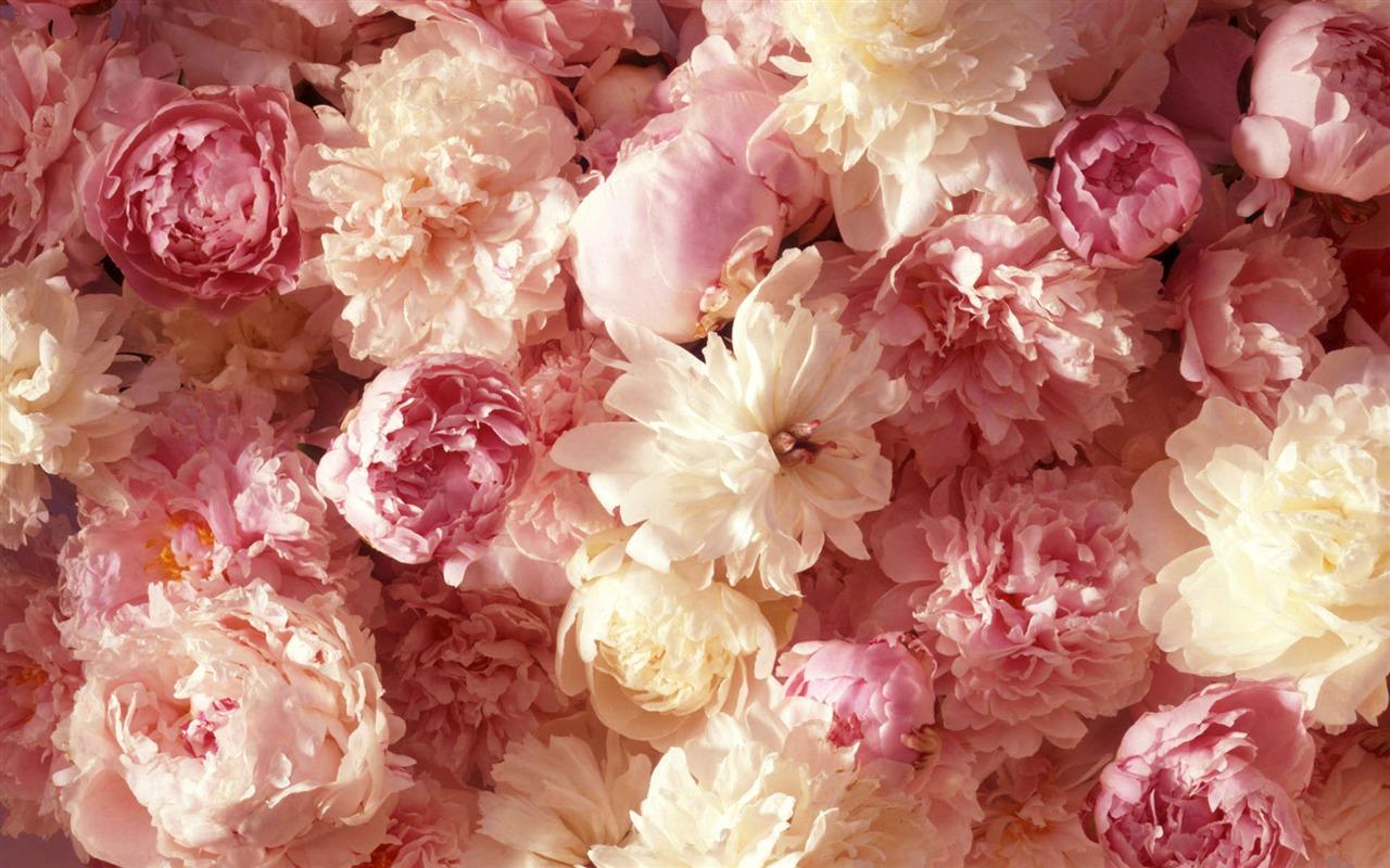 Hintergrundbilder Blumen .