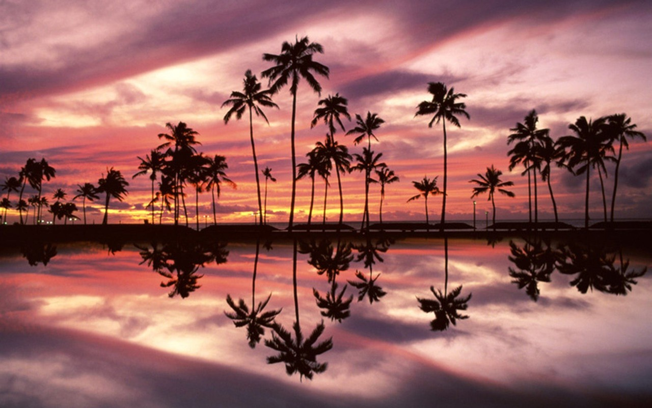 Palm Tree Sunset Wallpaper 2 16 1280x800 Wallpaper