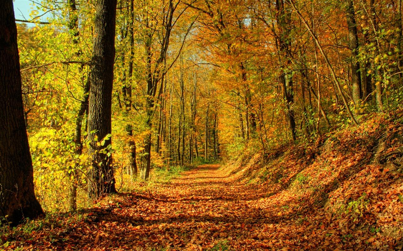 Фото красивые лес