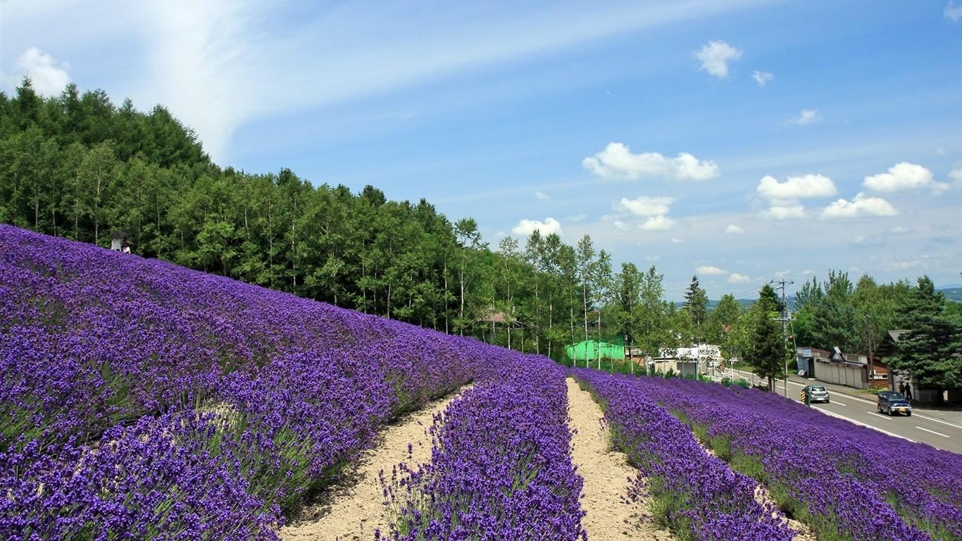 hokkaido countryside scenery #5 - 1366x768 wallpaper download