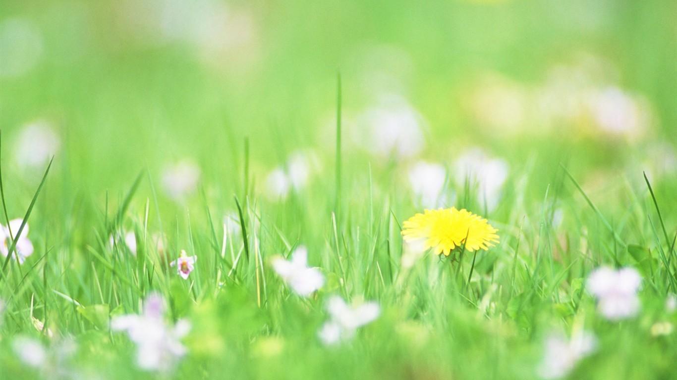 Enfoque Suave Flor De Escritorio #4