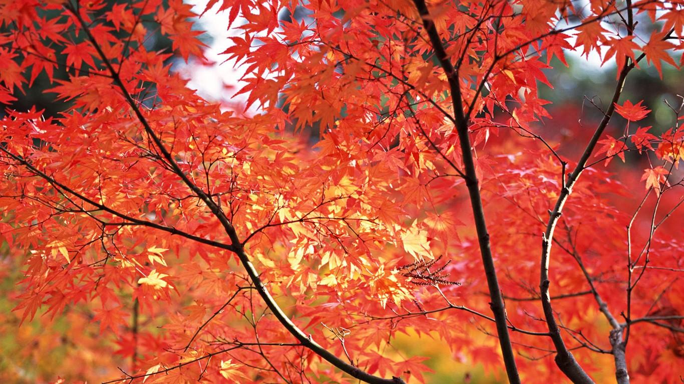 京都、日本、風景壁紙 #17 - 1366x768.