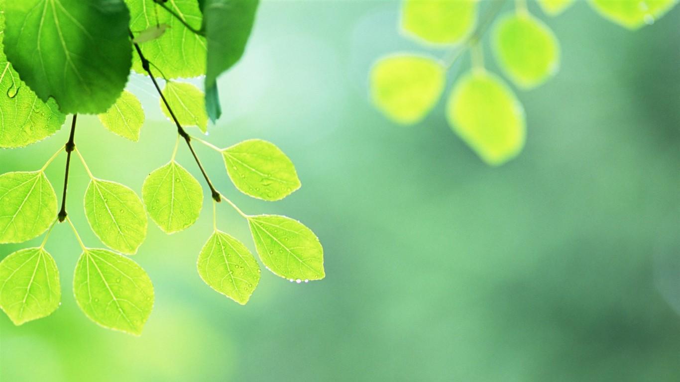 Fondos De Hojas De Papel: Frescas Hojas De Papel Tapiz Verde (2) #6