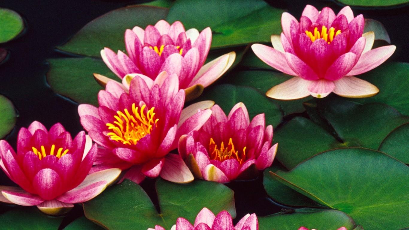 Fondos De Pantalla De Flores Hermosas: Hermoso Fondo De Pantalla Flores (3) #18