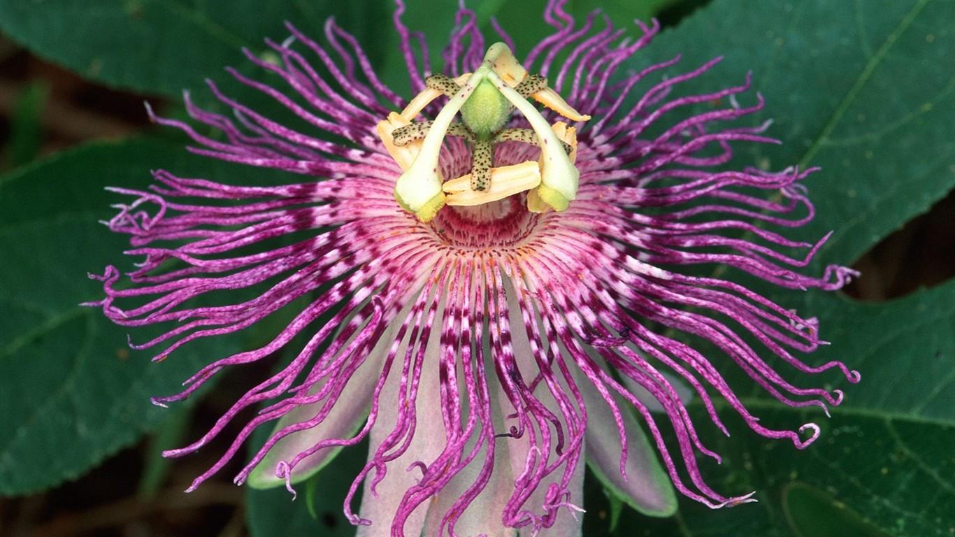 Fondos De Pantalla Hermosos De Flores: Hermoso Fondo De Pantalla Flores (3) #28