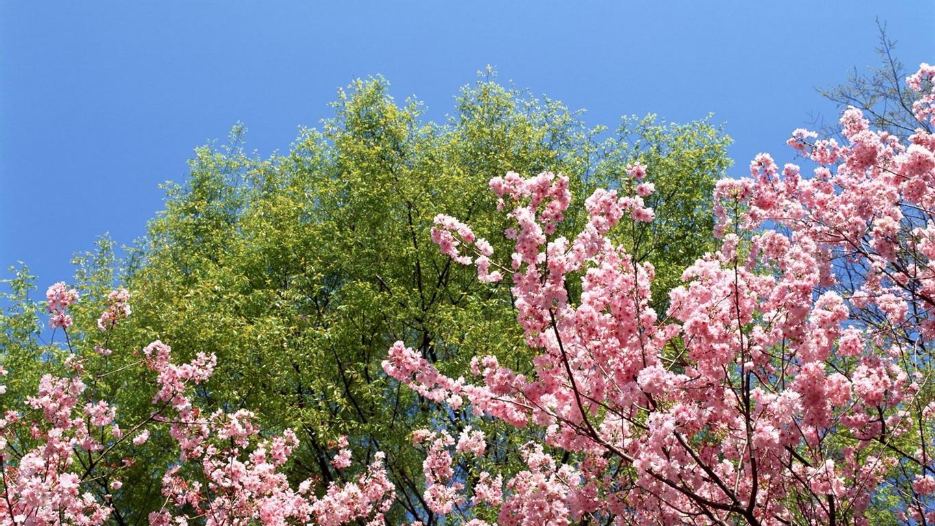 Primavera naturaleza fondos de pantalla 7 1366x768 for Fondo de pantalla primavera