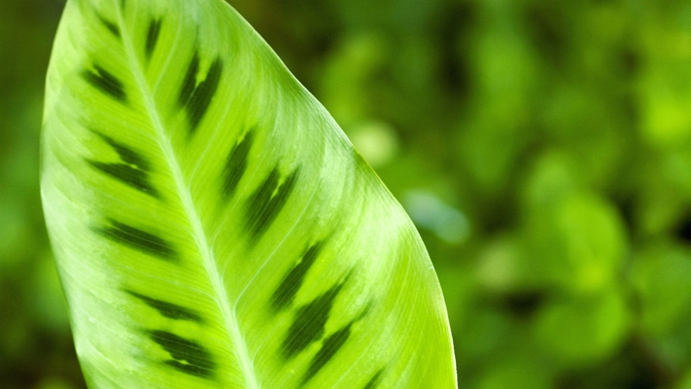 Plantas fondos de color verde hoja 1 1366x768 fondos de - Color verde hoja ...