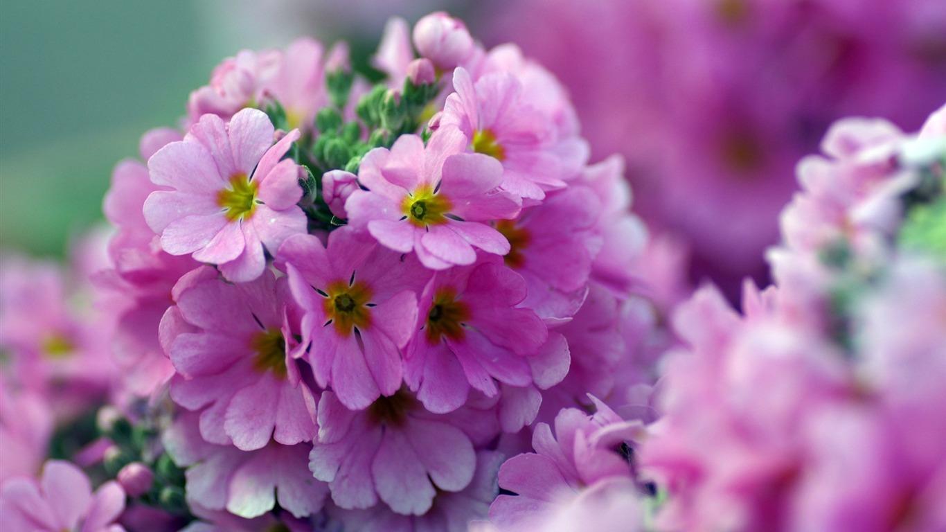 Цветы hd картинки