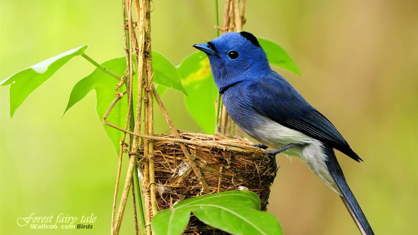 青い鳥のロンド-あらすじ-40話-41話-42話-感想付き …