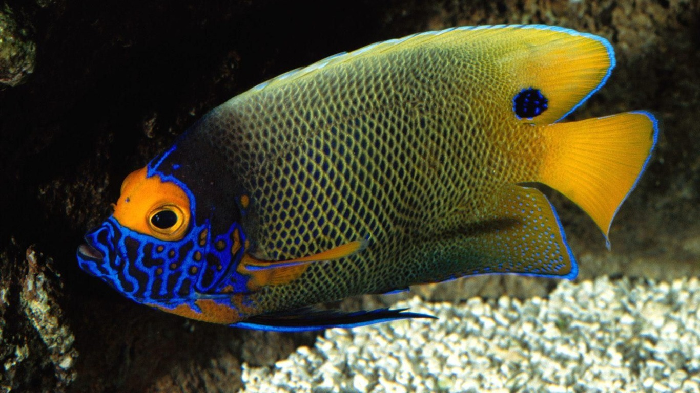 Image gallery peces tropicales - Peces tropicales fotos ...