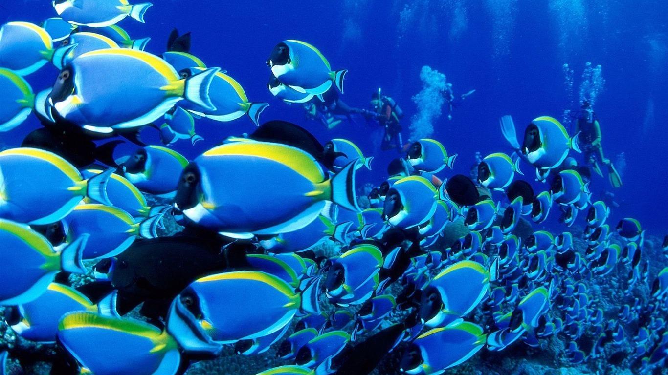 写真の説明 : カラフルな熱帯魚の壁紙アルバム #25