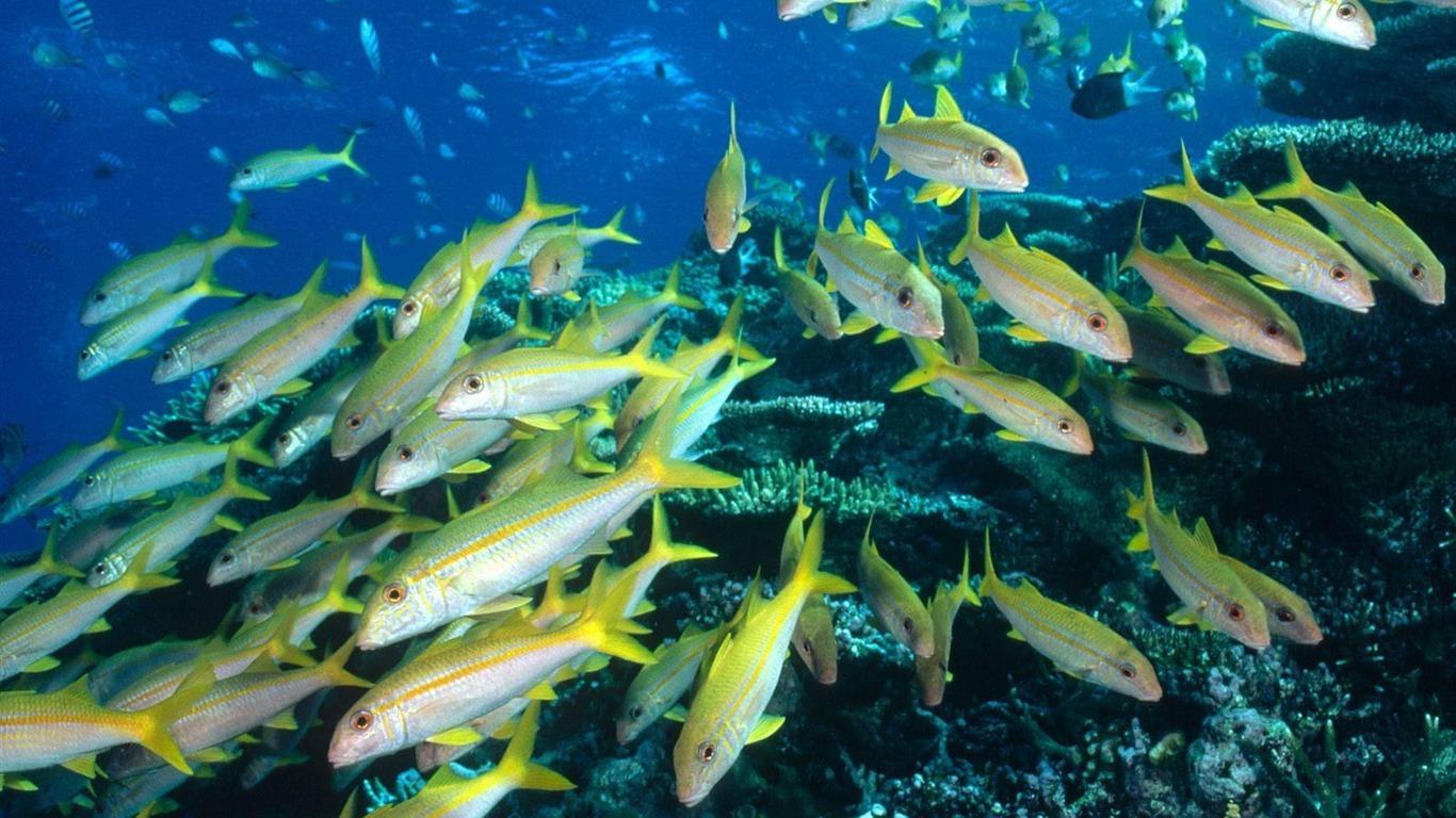 Colorful Tropical Fish Wallpaper Albums 12 1366x768