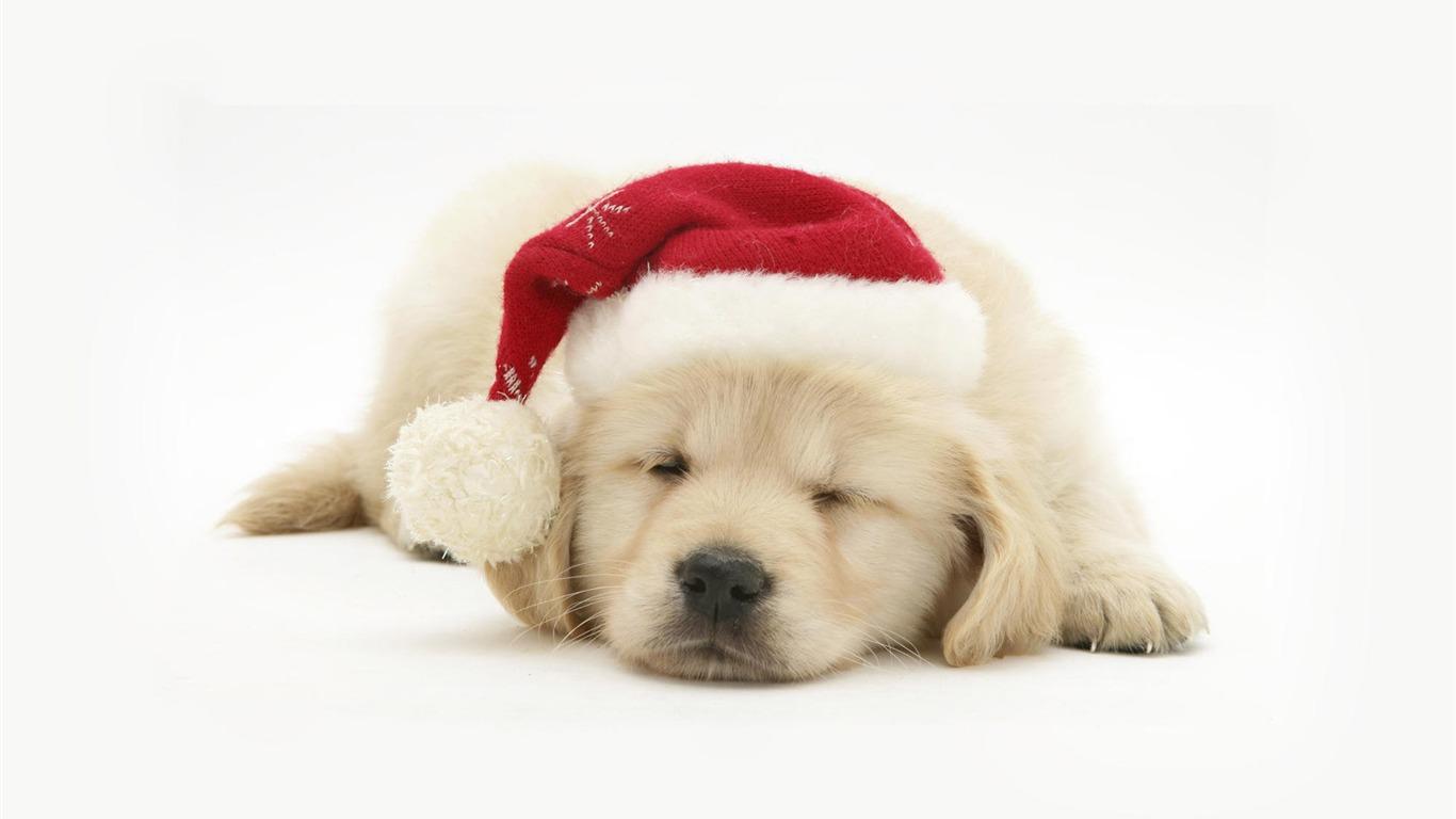 サンタ帽子犬