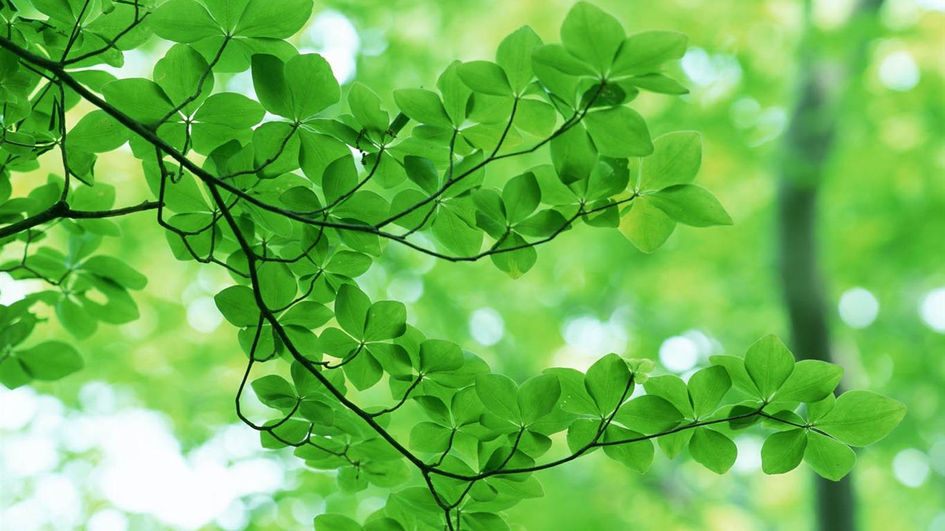 Fond D Ecran Vert Photo Feuille 3 7 1366x768 Fond D Ecran Telecharger Fond D Ecran Vert Photo Feuille 3 Plantes Fond D Ecran V3 Fond D Ecran Du Site