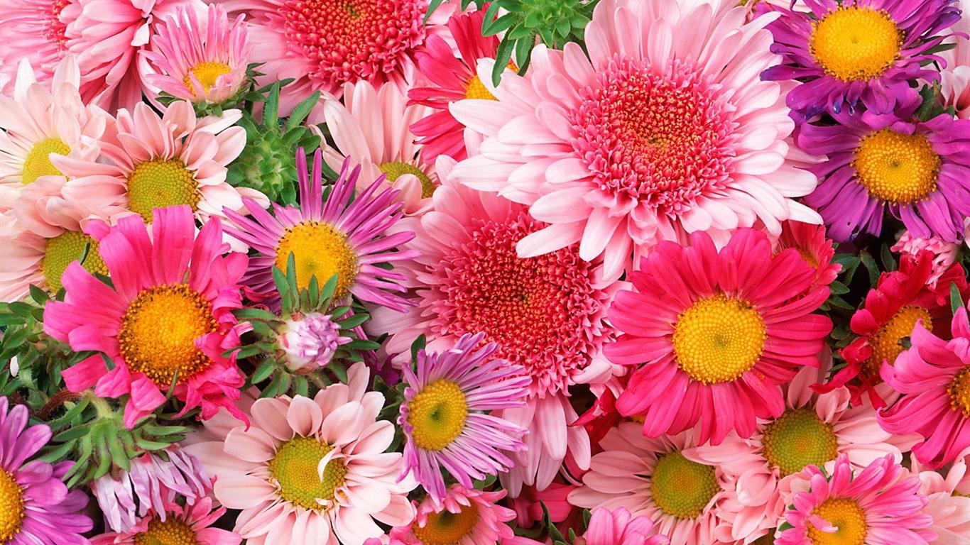 Widescreen Wallpaper Flowers Close Up 12 1
