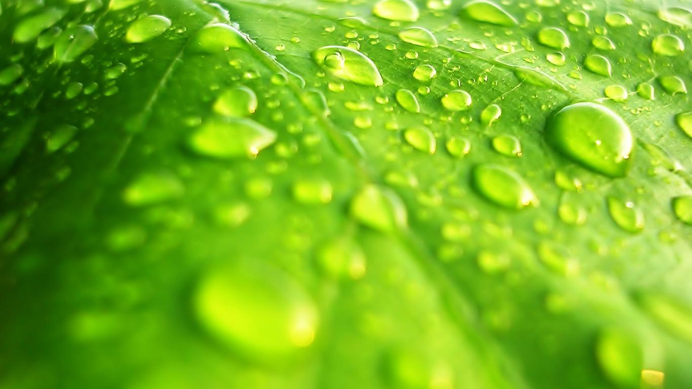 Flores hoja verde fondo de pantalla cerca 3 1366x768 - Plantas de hojas verdes ...