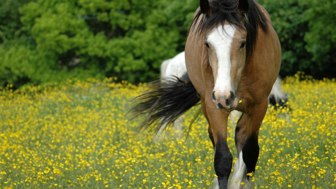 Super Pferd Fototapete (2) #8 - 1366x768 Wallpaper ...
