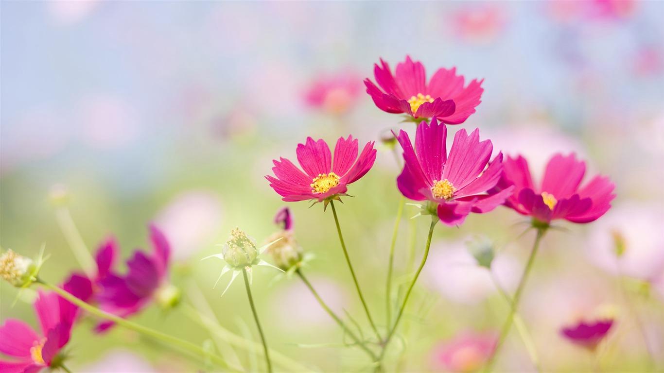 Widescreen Wallpaper Flowers Close Up 33 1