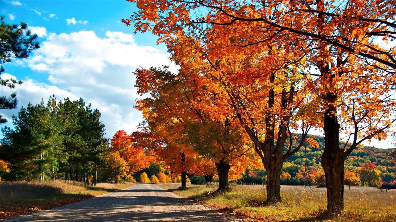 Windows 8 1 Theme Hd Wallpapers Beautiful Autumn Leaves 10