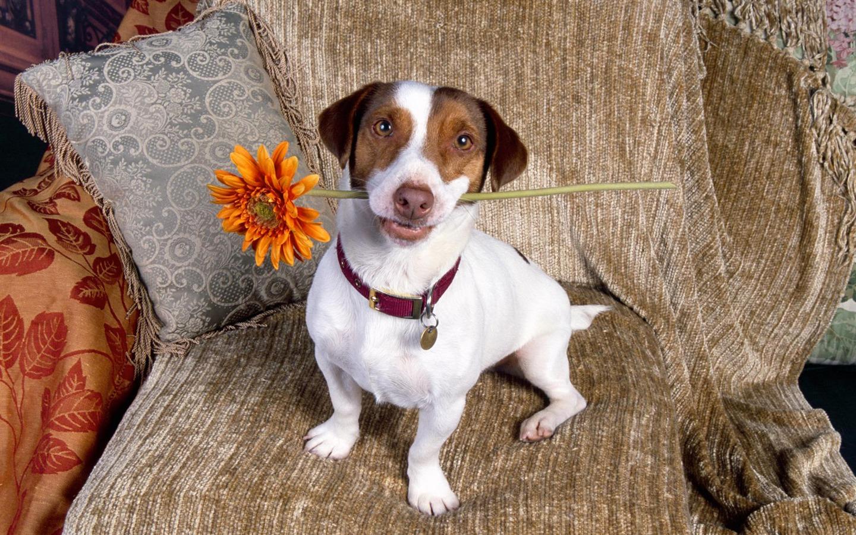 Фото собаки с цветком в зубах