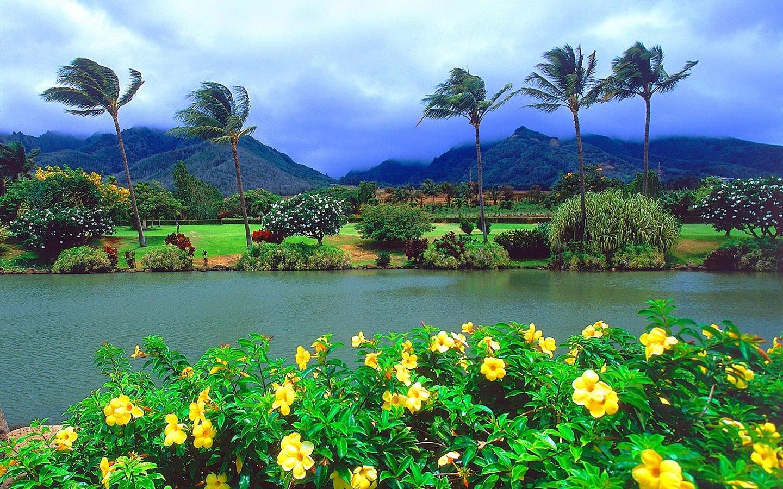 paysage dhawaii - Image