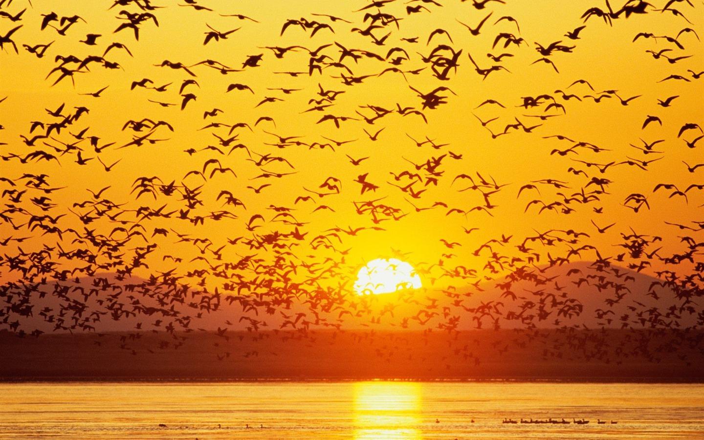 Selecci n de la salida del sol puesta de sol y fondos de for Fondo del sol