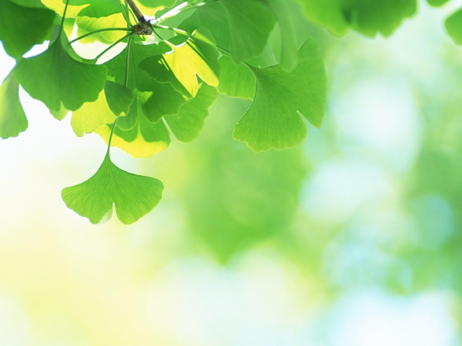 Fondos De Hojas De Papel: Frescas Hojas De Papel Tapiz Verde (2) #2
