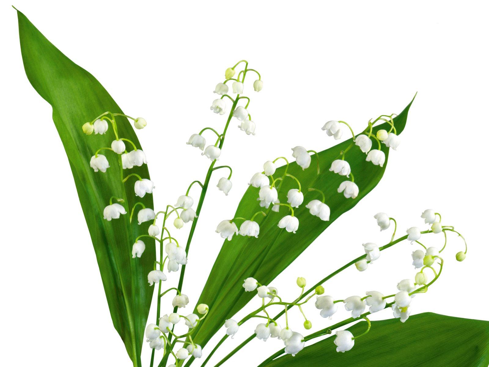 ... Blumen Wallpaper - Pflanzen Hintergrundbilder - V3 Wallpaper Site