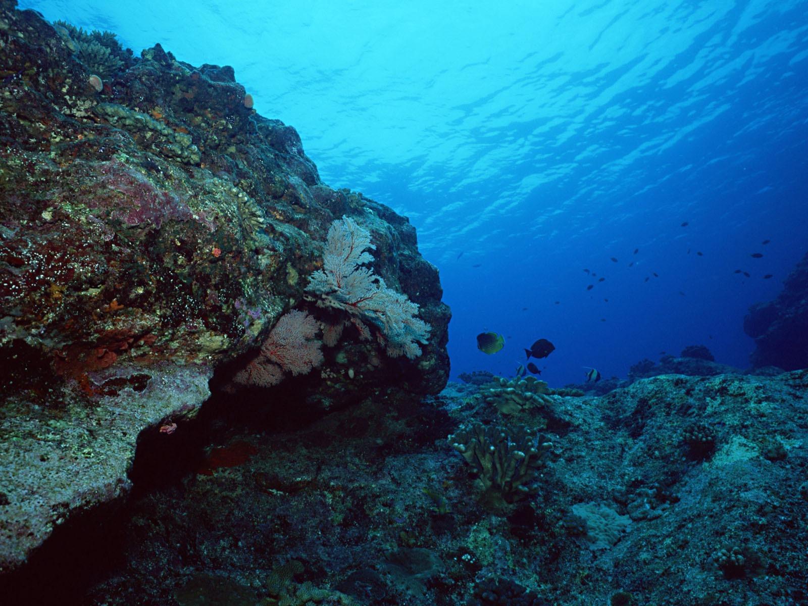 Deep Blue Underwater World Wallpaper 17 1600x1200