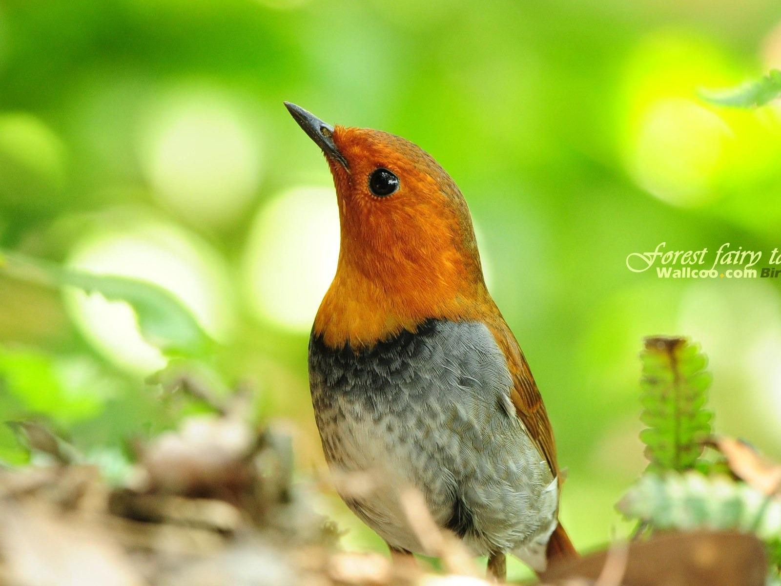 Beau papier peint des oiseaux au printemps #27 - 1600x1200 ...