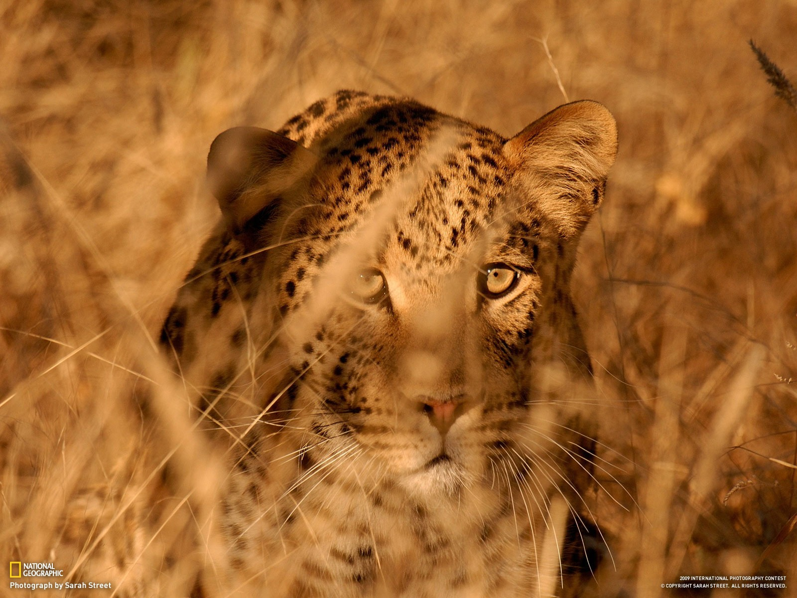 National Geographic Wallpapers Animal Articles 3 9