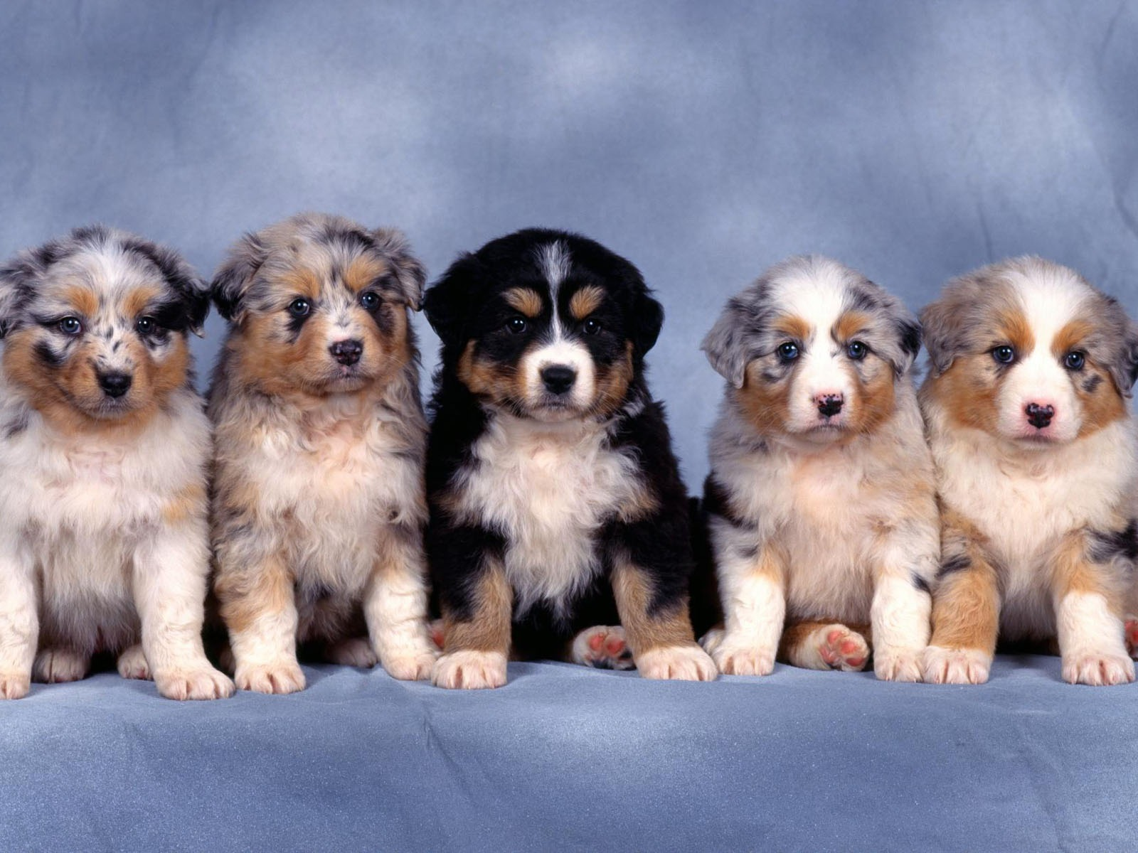 Puppy Photo HD wallpapers (1) #2 - 1600x1200