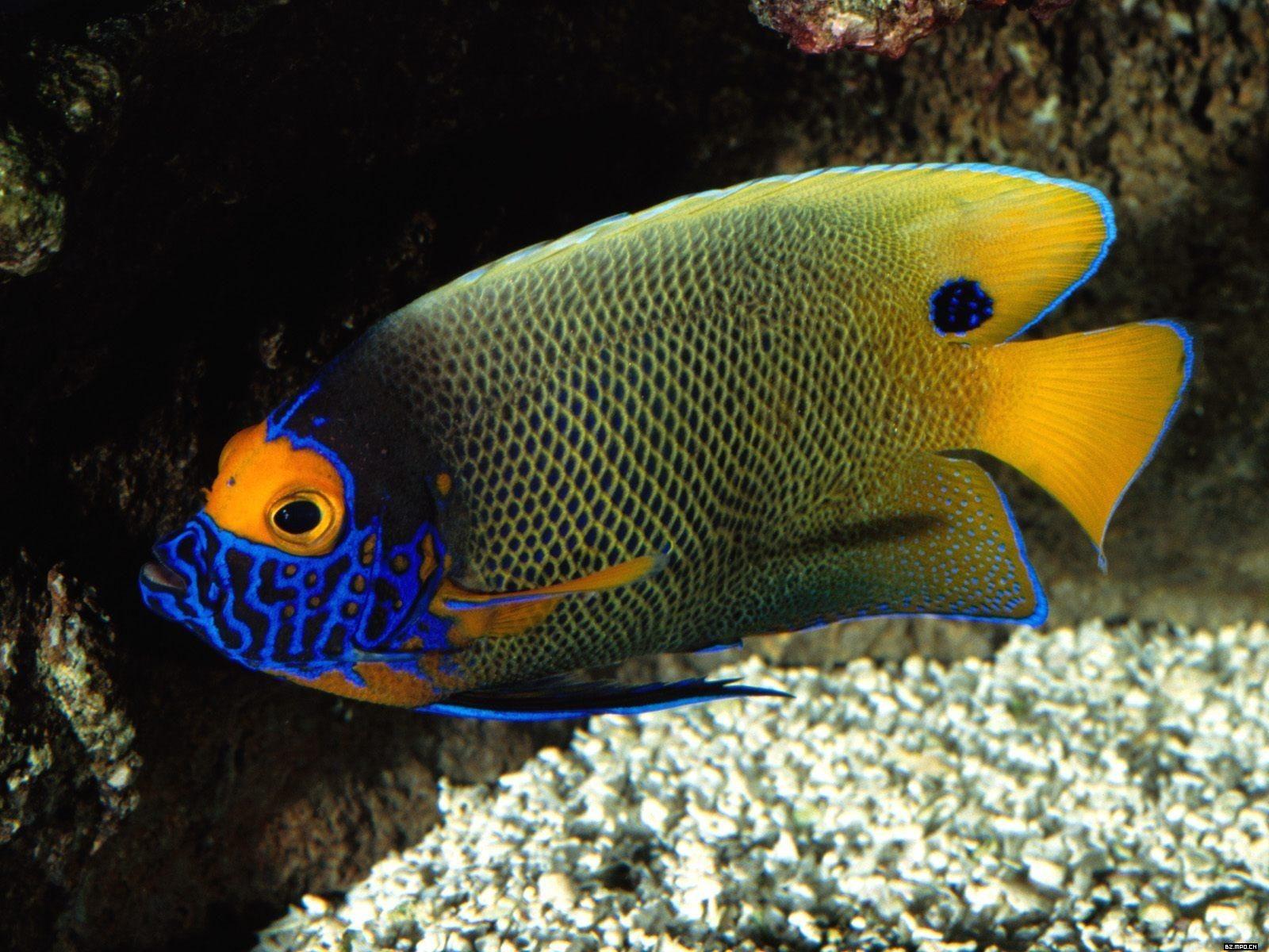 Álbumes coloridos fondos de escritorio de peces tropicales #21 ...