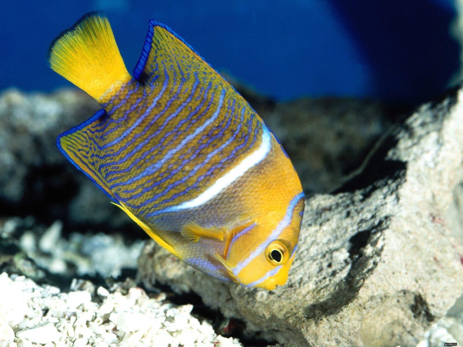 Colorful Tropical Fish Wallpaper Albums 4 1600x1200
