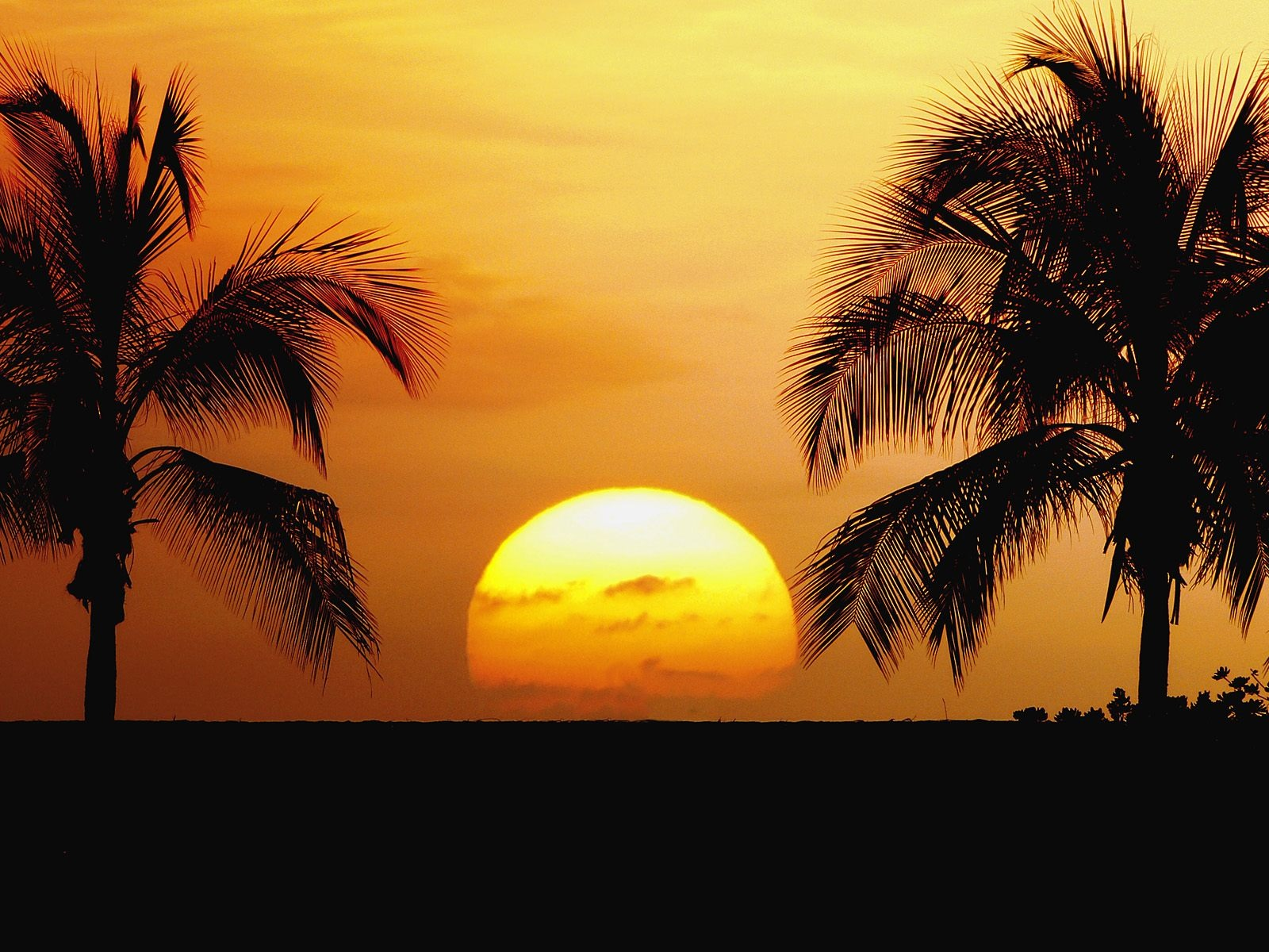 Beach Palm Tree Sunset Wallpaper Palm Tree Sunset Wallpaper 2
