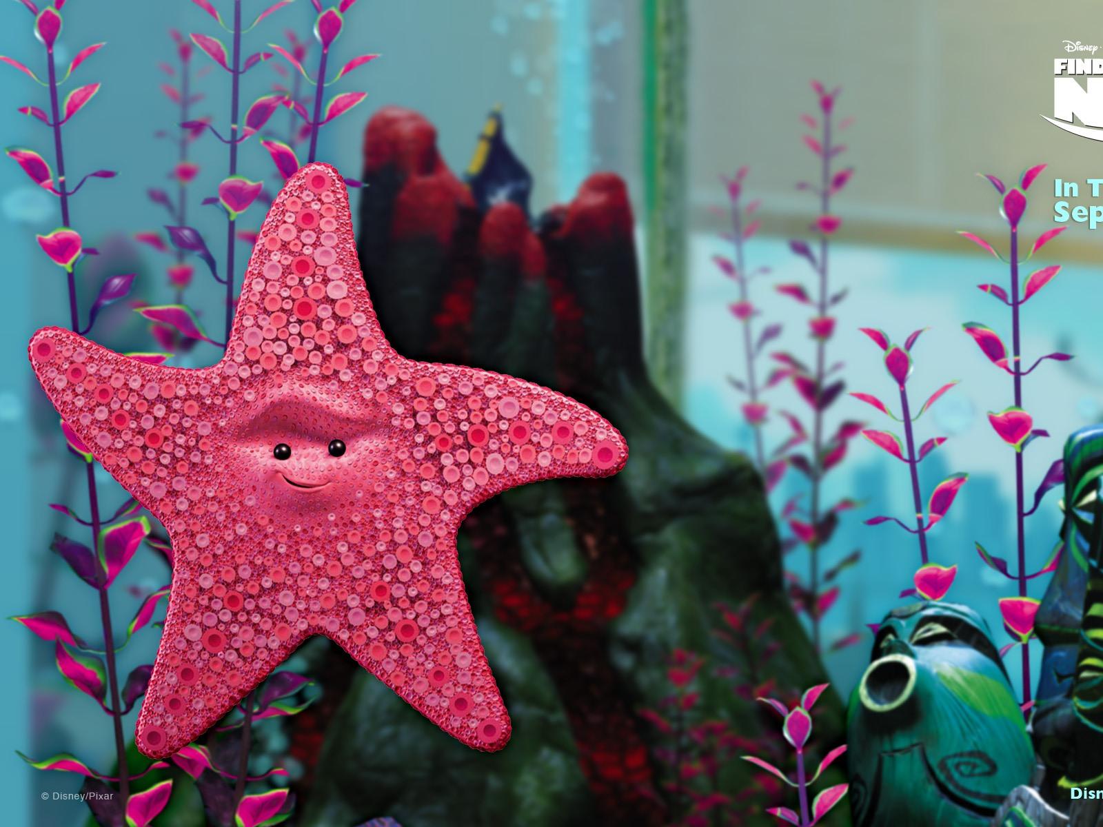 Descripción : Buscando a Nemo 3D 2012 HD fondos de pantalla #20