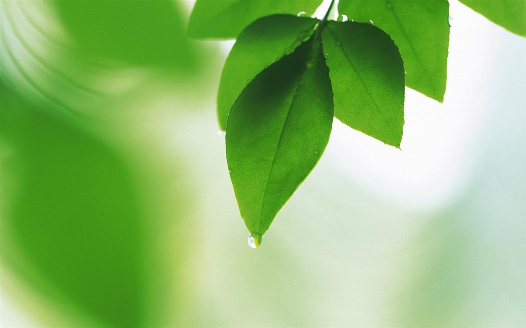 Fondos De Hojas De Papel: Frescas Hojas De Papel Tapiz Verde (2) #19