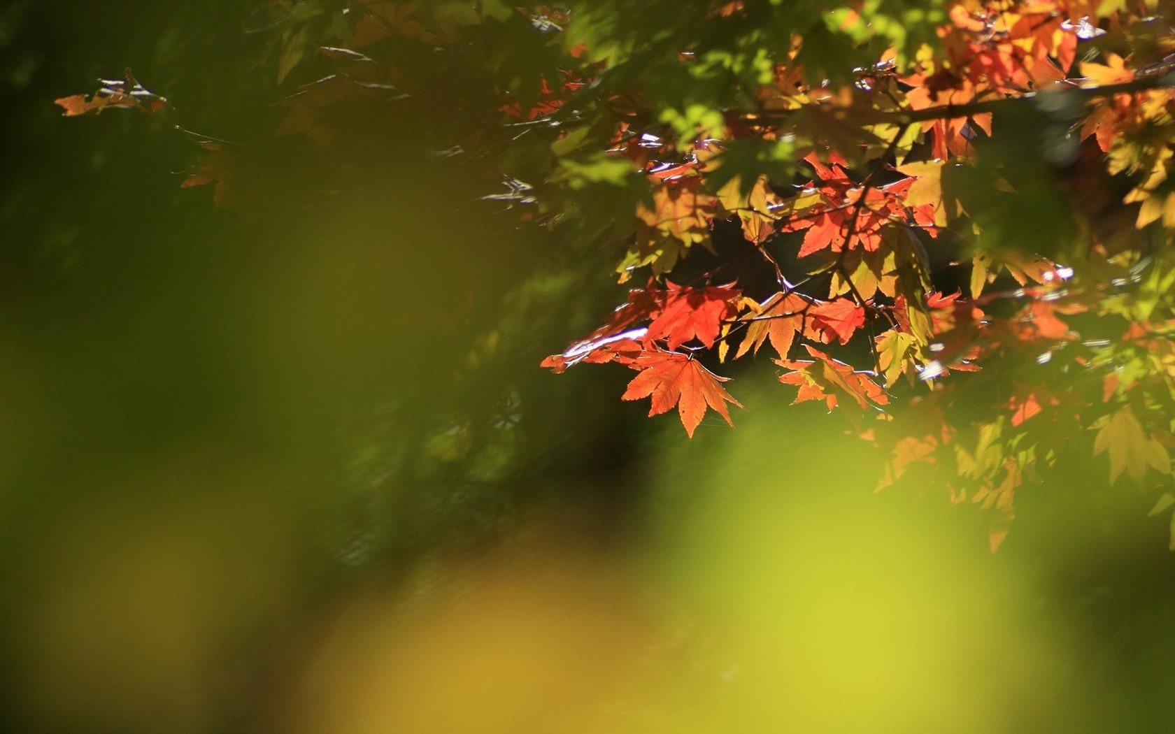 六甲山 紅葉