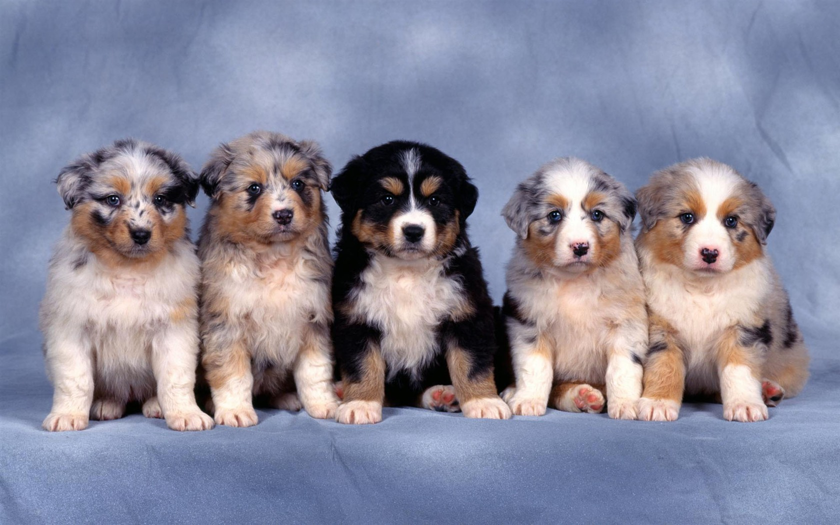 Puppy Photo HD wallpapers (1) #2 - 1680x1050