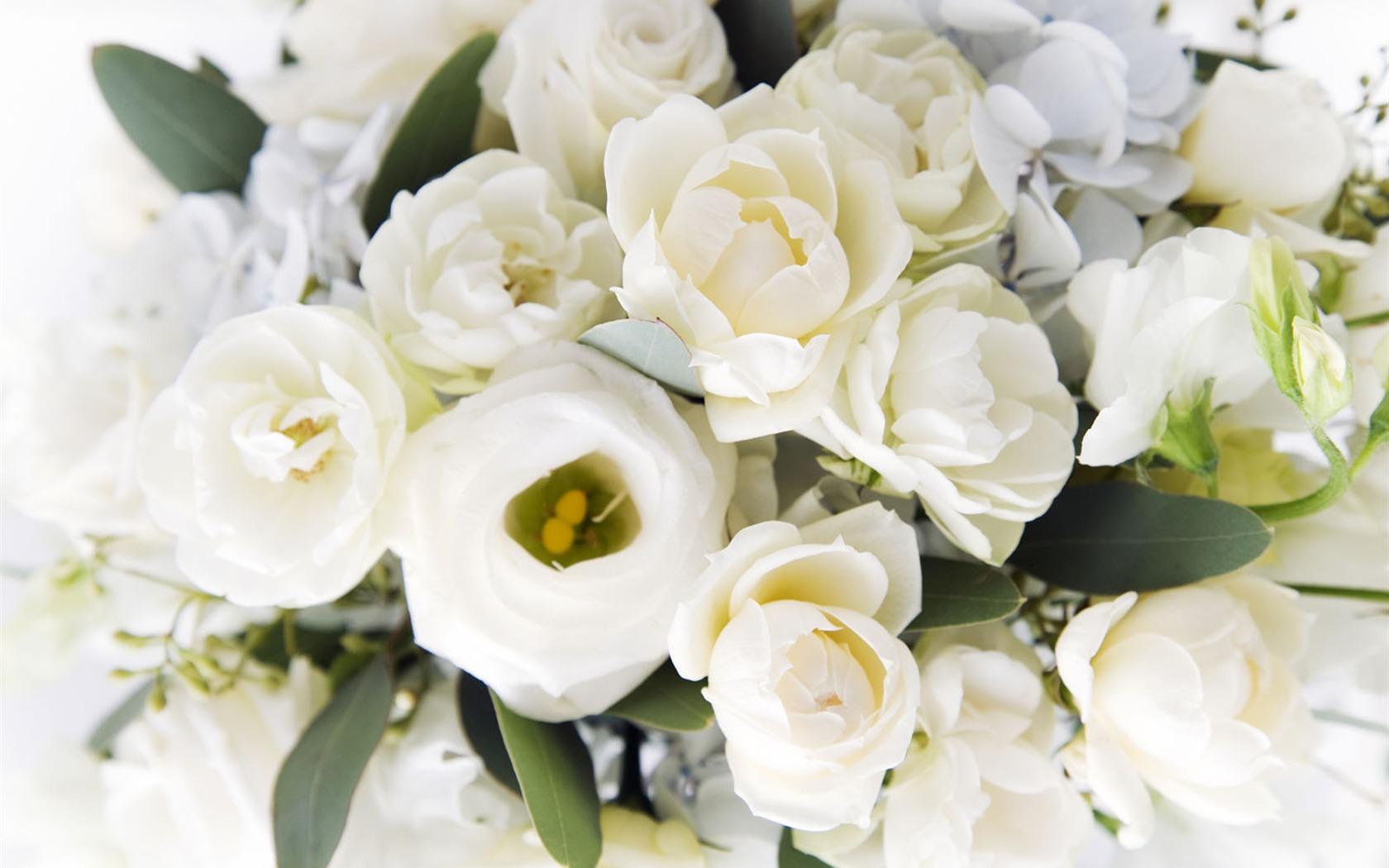 белые цветы видео