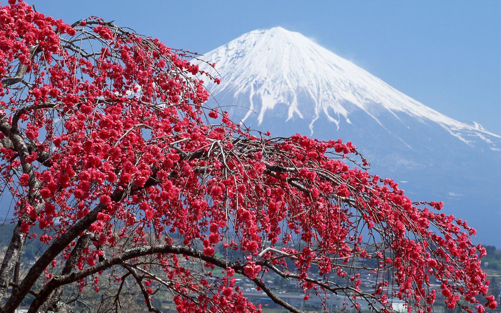 1 1 1680x1050 1 for Jardin japonais fond d ecran